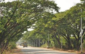TREES_