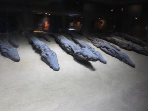 crocadile mummies