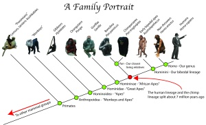 Ape-Family-tree