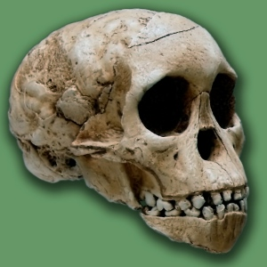 The Taung Child is a fossil of a skull.
